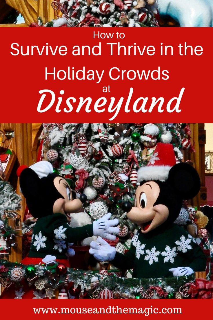 How to Thrive and Survive in the Holiday Crowds  at Disneyland