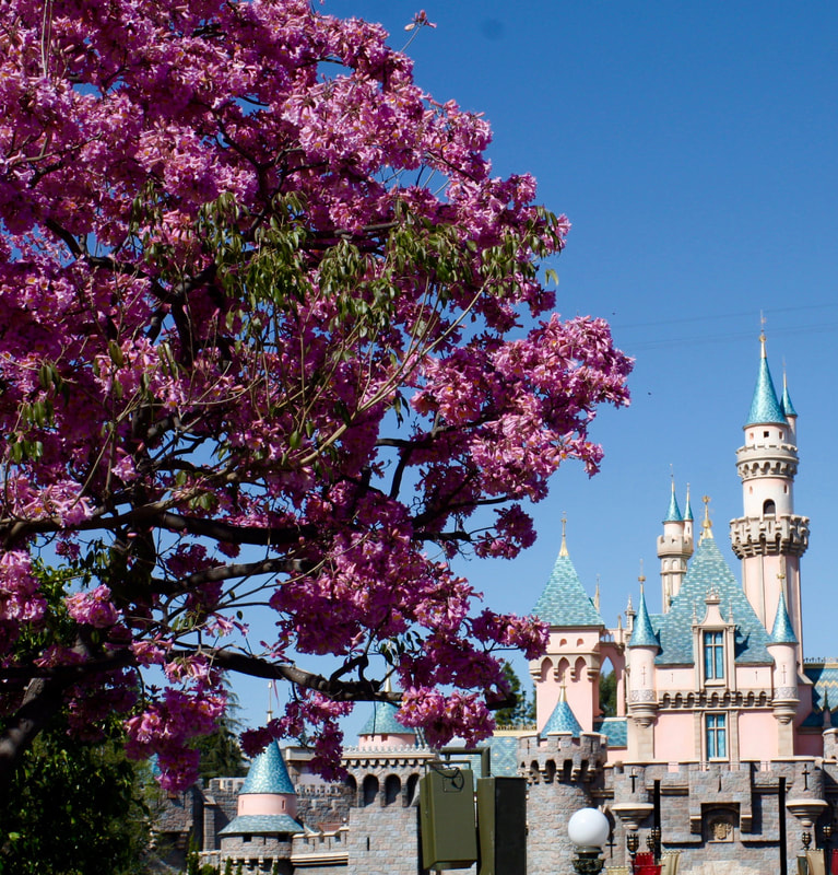 How Canadians Can Save On Disneyland Tickets in 2018 and 2019